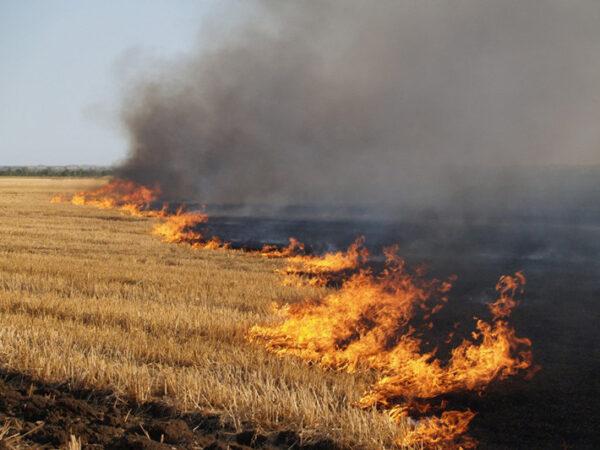 Спалювання сухостою: за понад два роки на Волині нарахували більше 800 пожеж